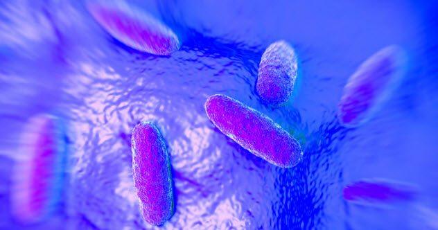 Salmonella đột biến