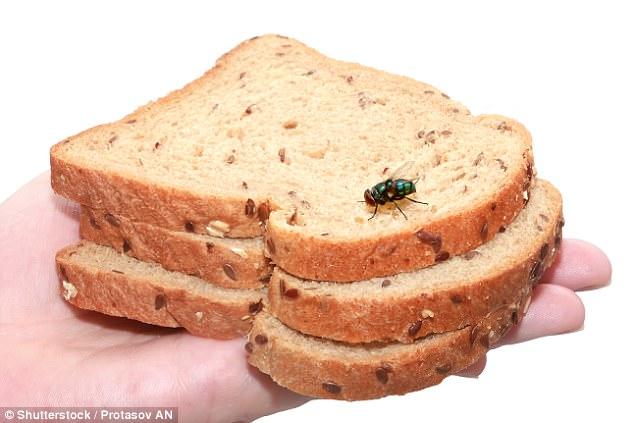 Lũ ruồi rất thích bâu vào những đĩa thức ăn thơm ngon
