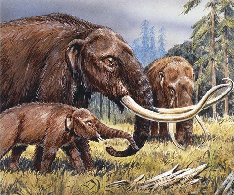 Mastodon - loài voi cùng họ với mammoth sống tại Bắc Mỹ.