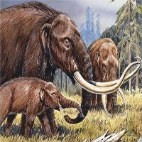 Tìm ra hóa thạch có khả năng viết lại toàn bộ lịch sử về con người