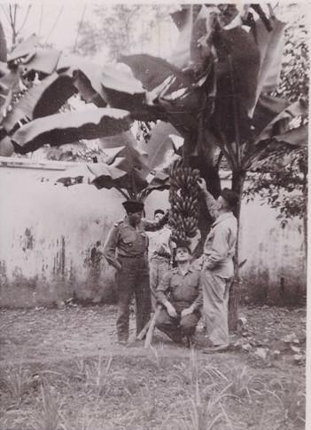 Các sĩ quan Pháp khám phá một cây chuối trong vườn ở khu doanh trại.