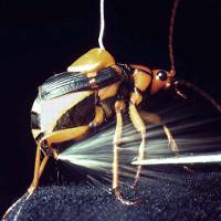 """Loài bọ này đích thực là những kẻ """"khủng bố"""" đích thực của tự nhiên"""