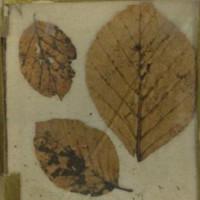 Vết máu trên lá cây giải bí ẩn 83 năm về cái chết của vua Bỉ