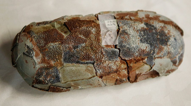 Một quả trứng khủng long hóa thạch.