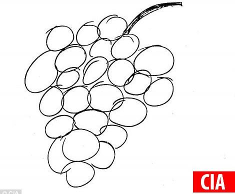 Nhân viên CIA đã vẽ ra một chùm nho