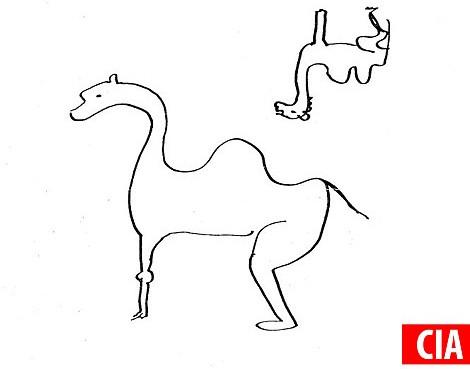 CIA vẽ hình một con lạc đà