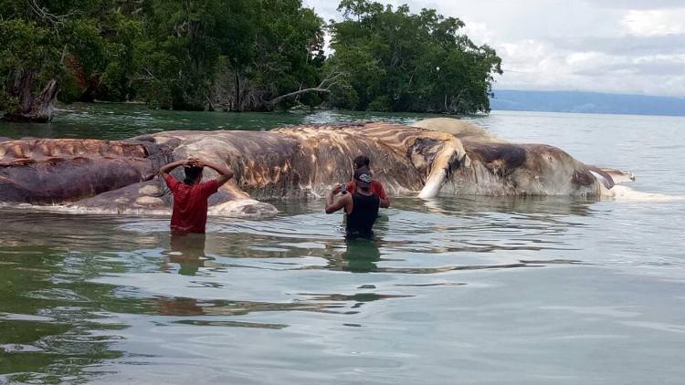 Mọi người tin rằng đây là xác cá voi khổng lồ.