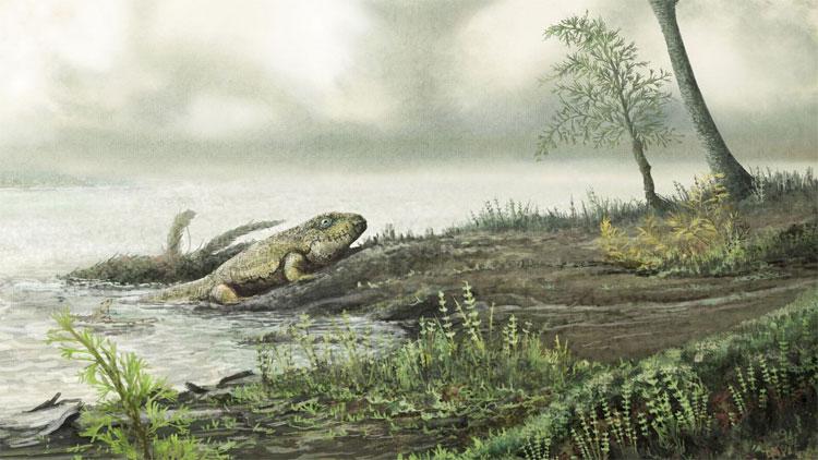 Siêu vi khuẩn theo động vật bò lên cạn 450 triệu năm trước.