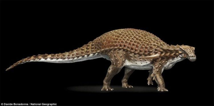 Hóa thạch tìm thấy thuộc loài khủng long bọc thép.