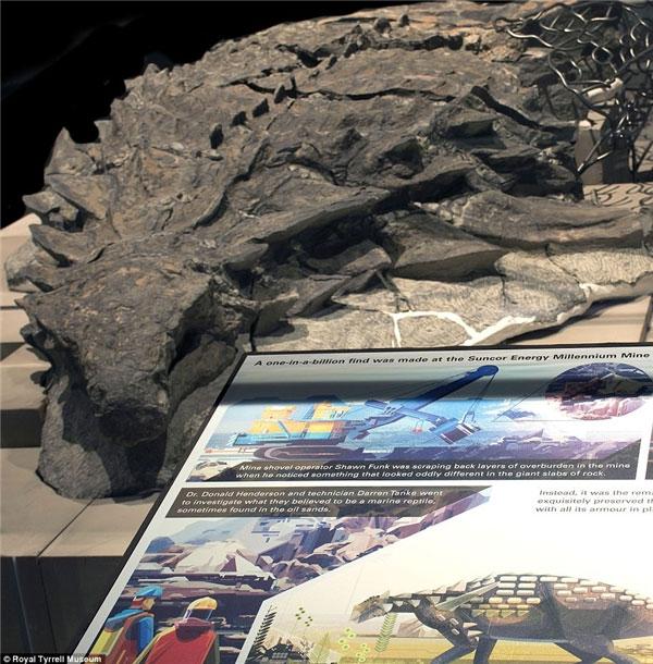 Đây được đánh giá là hóa thạch khủng long được bảo quản nguyên vẹn nhất trên thế giới.
