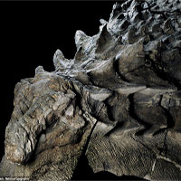 """Hóa thạch khủng long 110 triệu năm """"thật"""" đến kinh ngạc"""