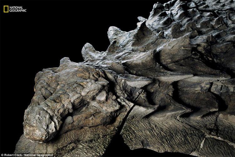 Hóa thạch khủng long được bảo quản vô cùng tốt khiến nó trông như một bức tượng khủng long thật.