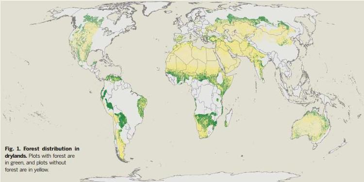 Hình ảnh mô tả sự phân bổ lượng rừng tại các vùng đất khô hạn trên thế giới.