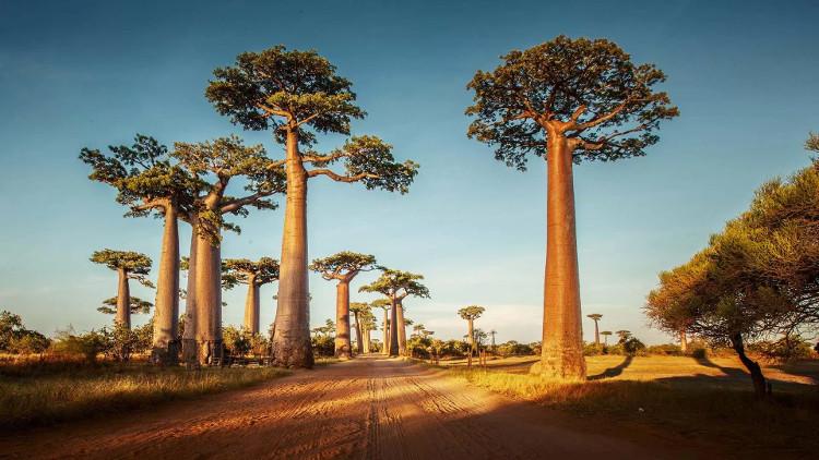 Những vùng đất khô hạn thực chất đang ẩn chứa từ 40 – 47% lượng cây rừng trên Trái Đất.