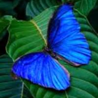 """Đột phá công nghệ """"lọc ánh sáng"""" lấy cảm hứng từ những cánh bướm"""