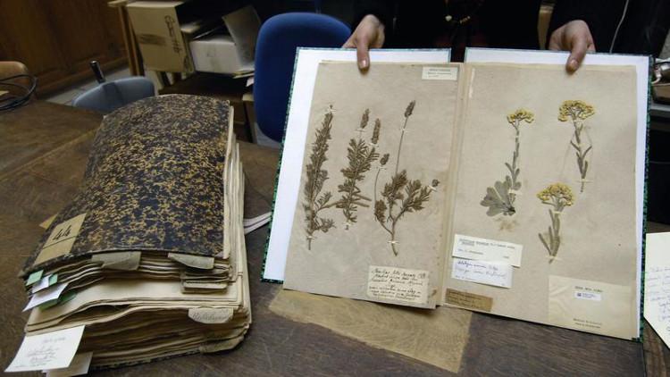 Tiêu bản cổ gồm các mẫu thực vật.