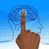 Não của con một khác với não những người có anh chị em