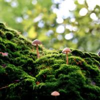 Video: Con người có thể sống thiếu thực vật không?