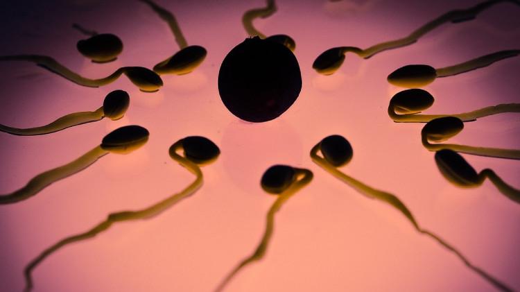Quá trình thụ tinh diễn ra sau khi tinh trùng đi vào trong trứng thành công.
