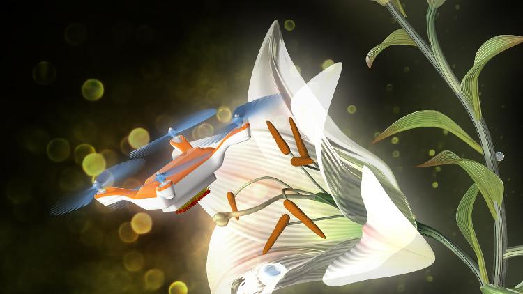 Các nhà nghiên cứu đã thử nghiệm máy bay mini để thụ phấn cho một loại hoa.