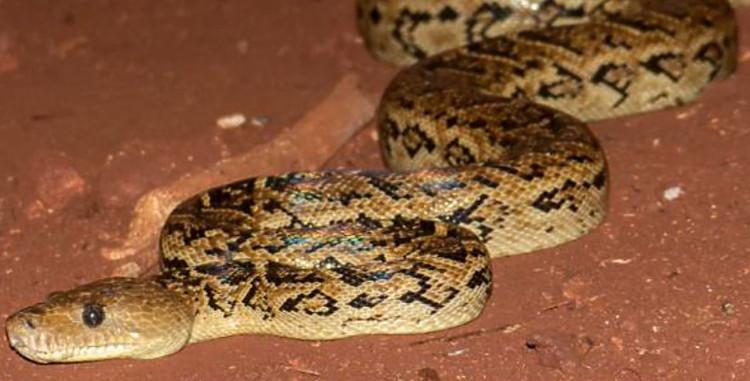 Bất cứ khi nào lũ rắn cùng nhau đi săn, chúng lại chọn một địa điểm cố định.