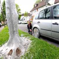 Tỉnh dậy thấy lớp màng kinh dị che phủ ô tô, cây cối