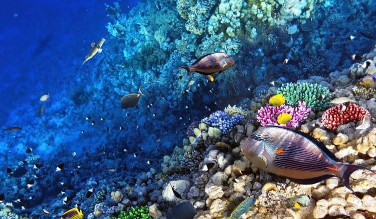 Great Barrier Reef sẽ biến mất trong 20 năm tới hoặc hơn nữa.