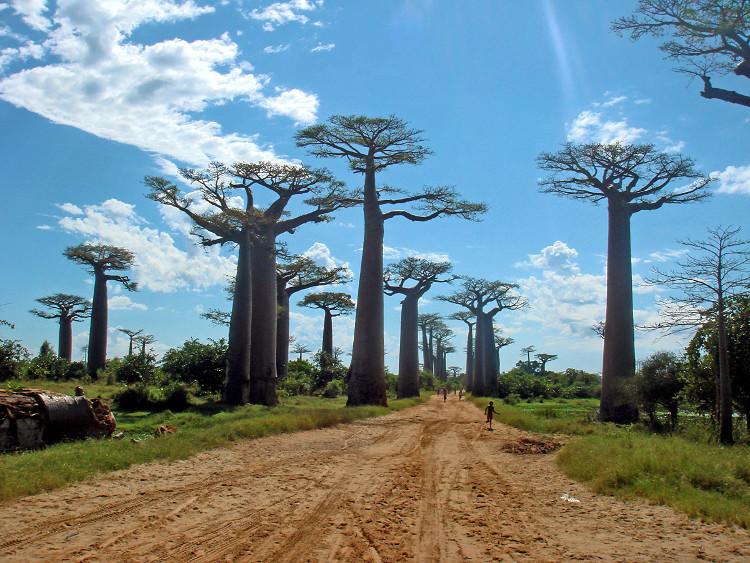 Hoạt động đốt rừng làm đất nông nghiệp, khai thác gỗ sẽ làm rừng Madagascar sớm biến mất.