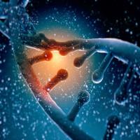 """Gene """"ích kỷ"""" ở người chứa mầm mống của sự hủy diệt nhân loại"""