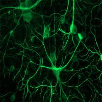 Não bộ chúng ta luôn có xu hướng dự đoán tương lai, bạn có nhận ra điều đó không?