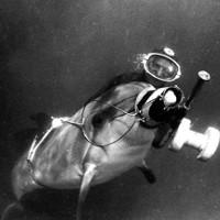 Nga dùng cá voi bảo vệ căn cứ hải quân?