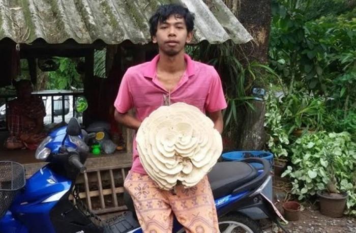 Đây là loại nấm độc, không thể nấu ăn.