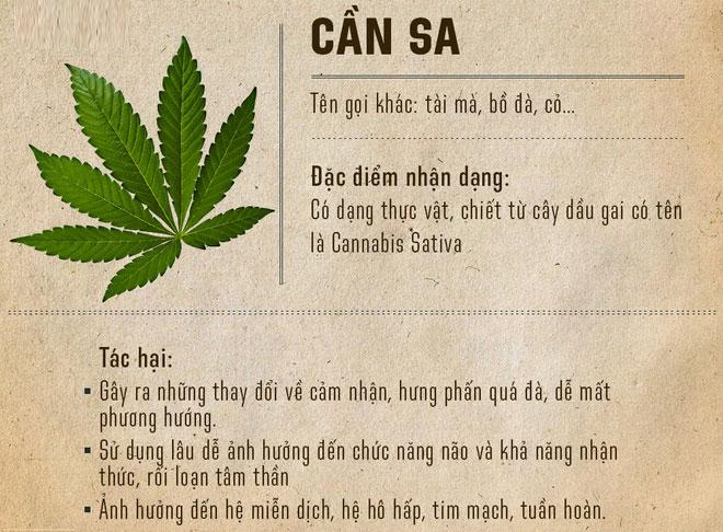 Cần sa là loại cây có chứa chất gây nghiện (hay gọi là chất ma túy).