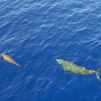 Hình ảnh chưa từng thấy của cá voi lặn sâu 3.000 mét