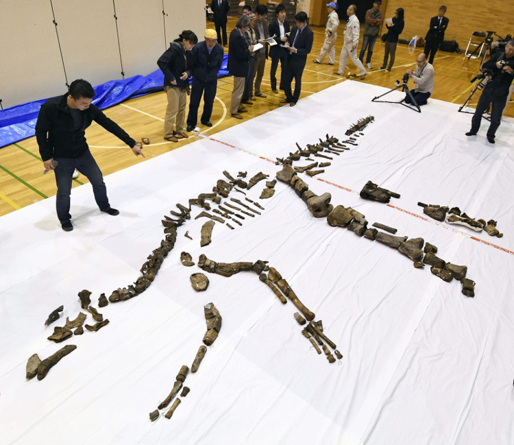 Bộ xương dài 8m, từng sinh sống trên trái đất cách đây khoảng 72 triệu năm.