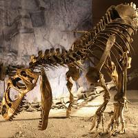 Lũ quét chôn vùi hàng chục xác khủng long trong ao tù