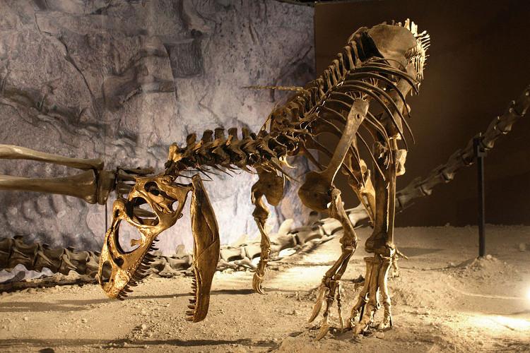 Hóa thạch khủng long Allosaurus.
