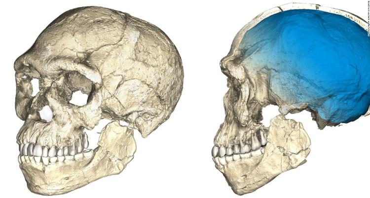 Hộp sọ của hóa thạch người hiện đại cổ nhất thế giới.