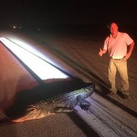 Lao lên đường băng cắn máy bay, cá sấu trả giá đắt