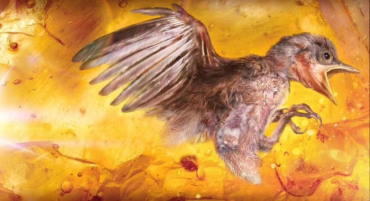 Đây là con chim non còn nguyên vẹn bị mắc kẹt trong hổ phách.