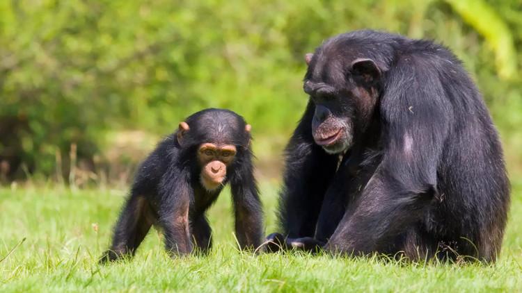 Khoa học lý giải sự khác biệt giữa người và động vật