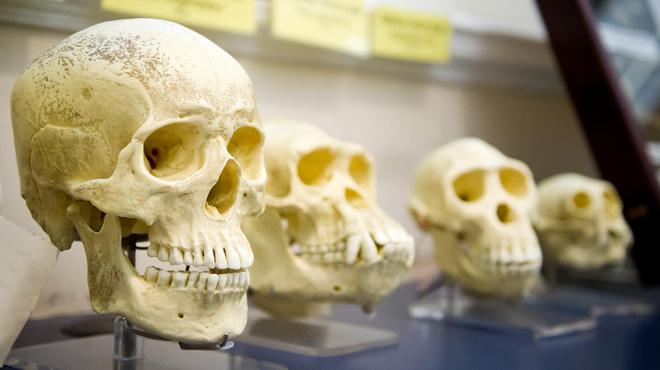 Có mối liên hệ nào giữa cái chết và sự chọn lọc tự nhiên?