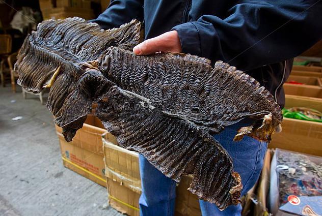 Hình dáng mang cá đuối hai mồm sau khi được phơi khô