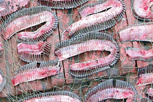 Những mang cá đuối hai mồm được người săn bắt cắt ra