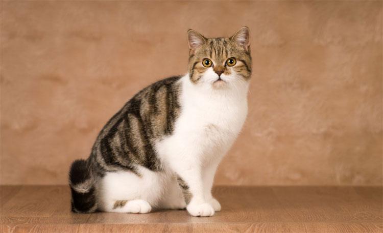 Mèo ban đầu được thả vào các cánh đồng hoặc kho trên tàu buôn để diệt chuột.