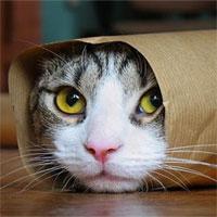 Loài mèo đã bắt đầu xâm chiếm thế giới từ khi nào?