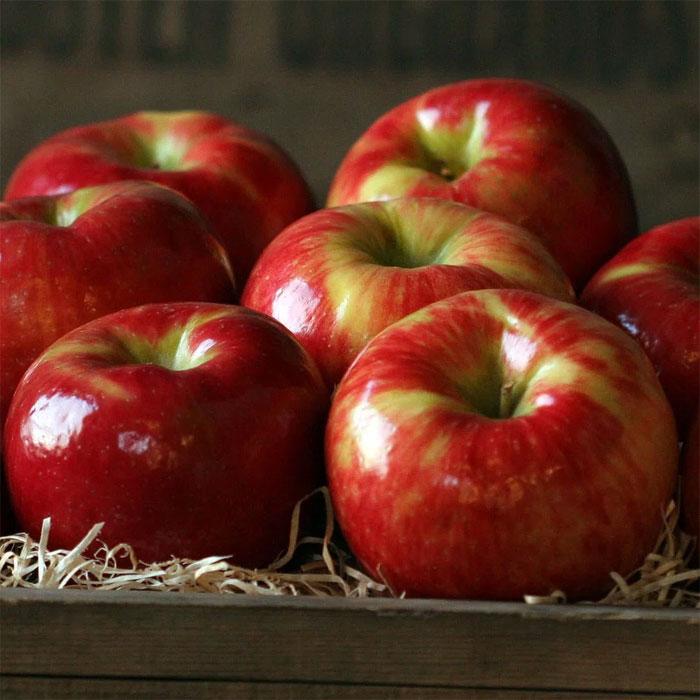 Tế bào của loại táo này có kích thước lớn hơn bình thường.