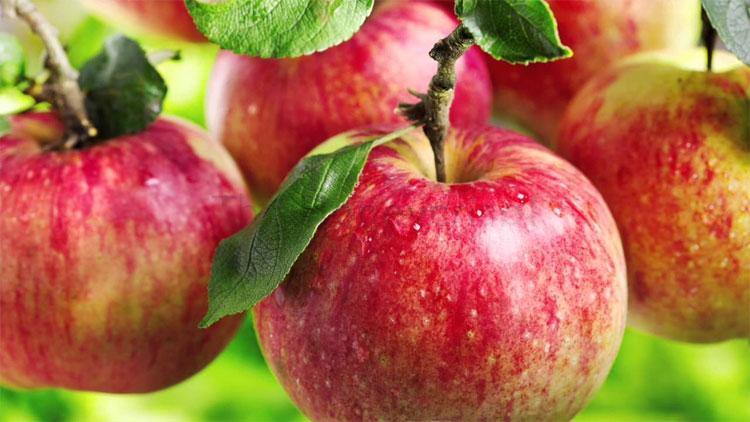 Táo cũng giống như người, các hạt táo bên trong một quả có nhiều điểm khác biệt.