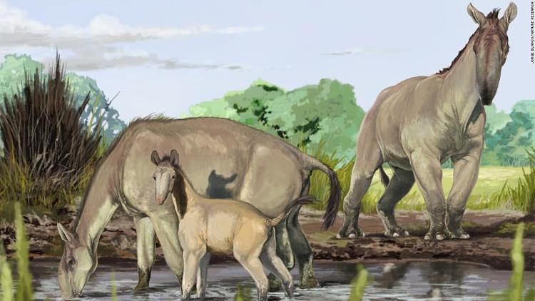 Loài Macrauchenia patachonica sống ở Nam Mỹ tuyệt chủng cách đây 12.000 năm.