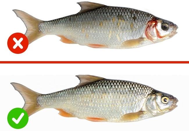 Cá ươn thì mắt đục, mang màu thẫm và da cá nhợt nhạt, vảy bong tróc.